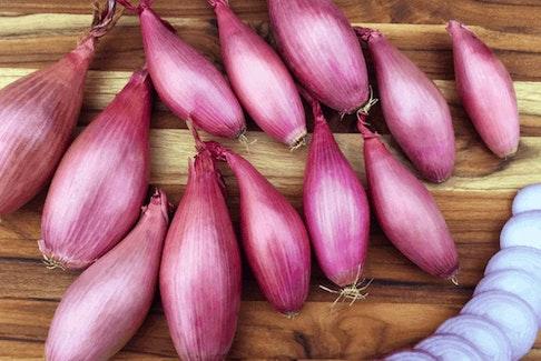 Echalion shallots, also known as banana shallots.