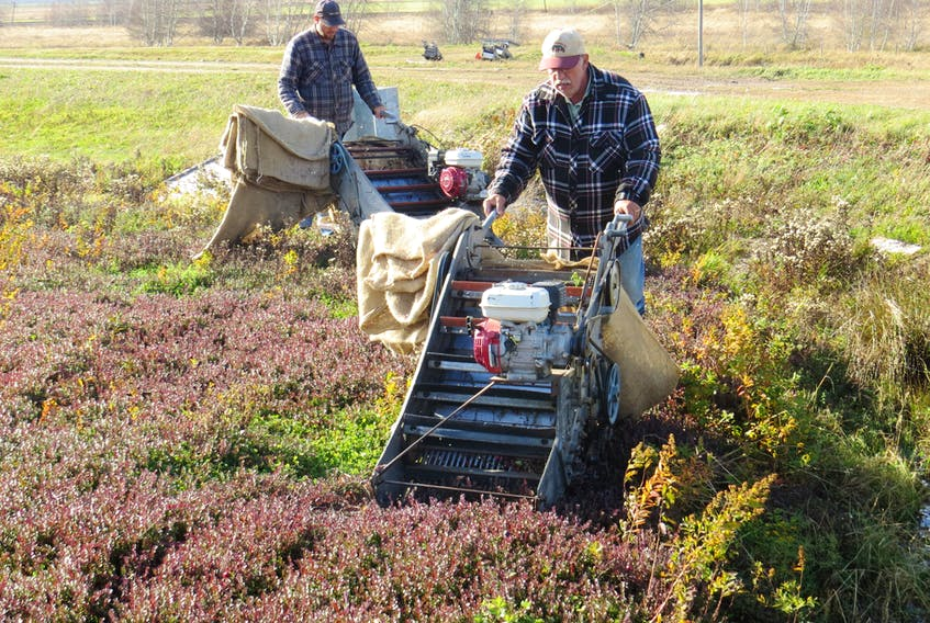 Above, Coastal Cranberries manager Mel Goodland, foreground, and son Matthew harvest their bountiful crop.