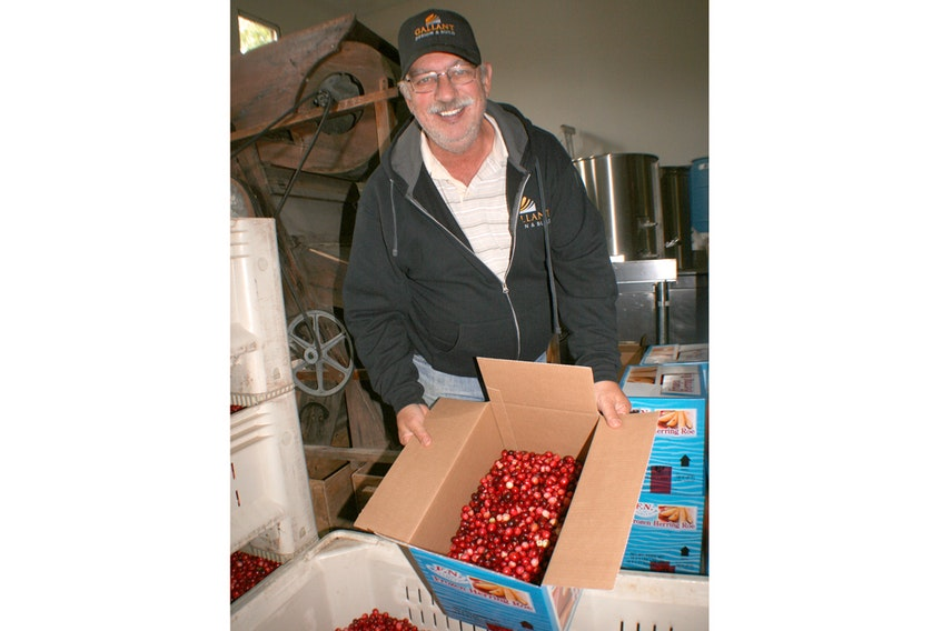 It's almost a month later than normal, but Mel Goodland is happy to finally bring this year's cranberry harvest to a close. The Dorchester producer said Maritime cranberry growers have had a tough time getting their berries out of the field this year, due to extreme wet and cold conditions this fall.
