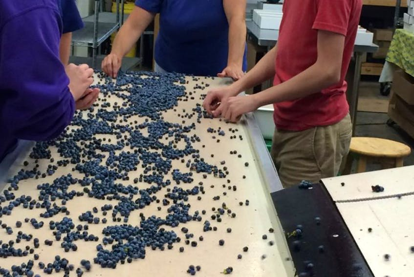 Blueridge Blueberries employees work the fresh-pack line machine during a night shift last week.
