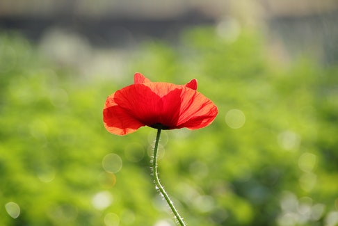 As the 100th anniversary of the end of the First World War nears, Canadians are reminded of the loss of thousands of young lives from their home communities and provinces.
