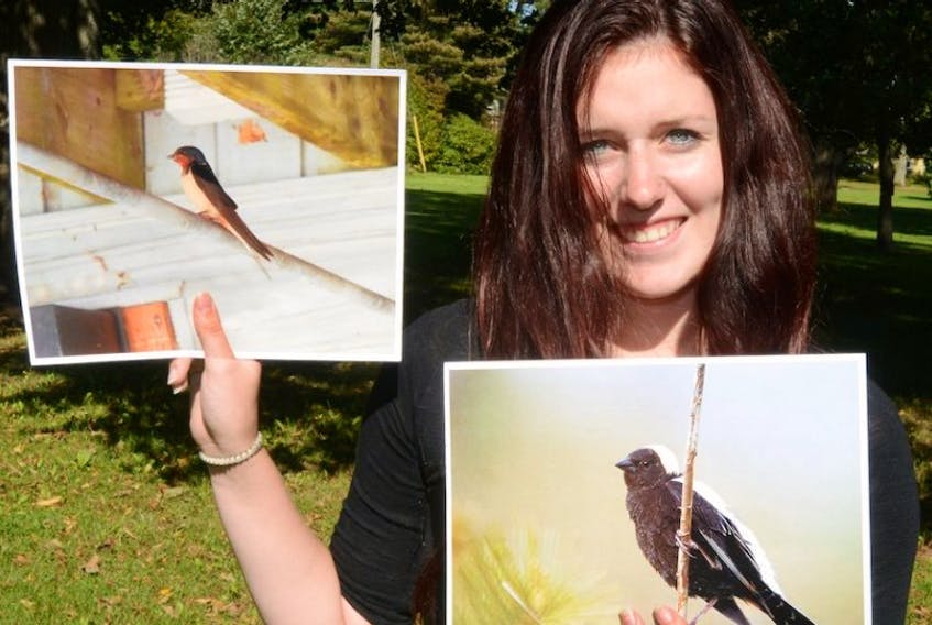 Shaylyn Wallace, a student from Holland College's Wildlife Conservation Technology Program, co-ordinated an Island Nature Trust project this year to ensure barn swallows and bobolinks have breeding locations.