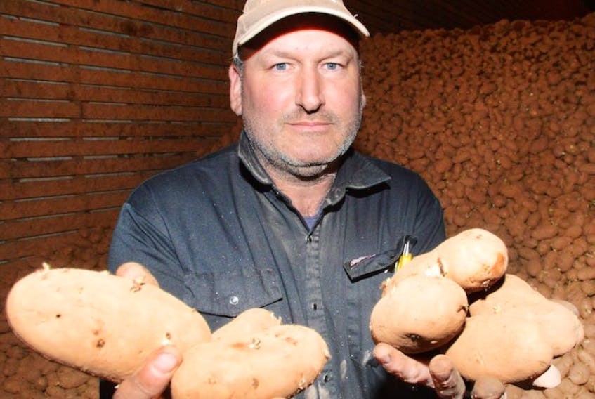 Hayden Produce Inc. is using a metal detector to make sure its potatoes are completely safe going to market. Here, Paul Squires, who works at the Vernon Bridge farm, shows off some of the product.