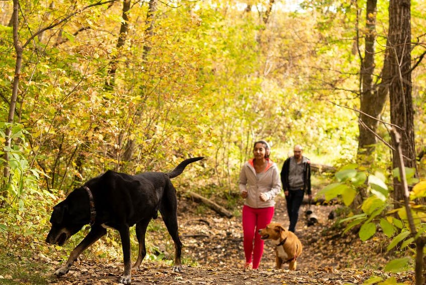Walkers take their dogs through forest trails covered in fall leaves.