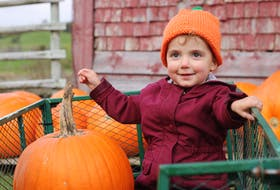 Dartmouth's Ellis Piccott, 2, was picking out pumpkins with family members at the Dill Family Farm in Windsor on Oct. 2. Ellis also picked up a pumpkin hat during the day.