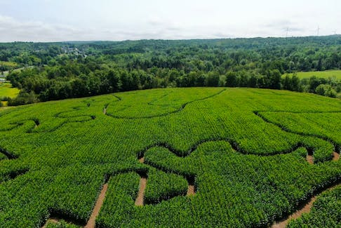 The Windsor Corn Maze was started as a collaborative effort between Linked Farms in Falmouth and Sarsfield Farms in Canning, with the goal of creating a new attraction for the community.  Contributed photo.