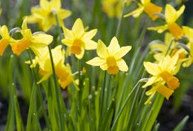 Planting bulbs in two or three layers makes best use of garden space.