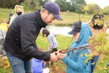 Aaron Stavert, left, helps Easton Macrea, right, pull a tree out of its nursery pot before planting.