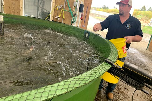 Sales and processing manager Wes Hearn hand feeds a tank of rainbow trout at Hamilton's Fish Farm in Centrelea, Annapolis County, on Wednesday, Oct. 13, 2021.