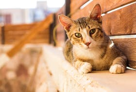 An anonymous donation to the City of St. John's Animal Care and Adoption Centre will cover the cost of the next 29 adult cat adoptions.