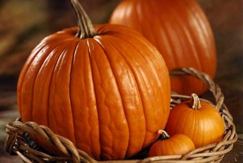 LIFEPumpkin-Facts