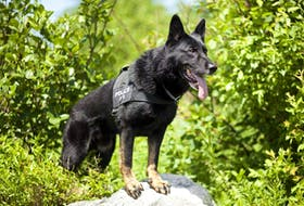 Retired RNC police dog Edge died on Thursday, Oct. 21, after battling cancer.