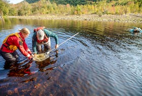 Blair Pardy, Cape Breton field unit superintendent, and Marin Stubbings, salmon project technician, release a salmon into the Clyburn Brook on Oct. 6. Angie Ricketts, Parks Canada resource conservation officer, is in the background checking on them from underwater. Contributed • Parks Canada Staff