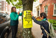 Mary Ellen Donovan (left) and Ilonka Soontiens tie a poster to a tree on Morris St. on Tuesday, Oct. 26, 2021. Area residents held a media conference to express their concerns about the possibility of trees being cut down to make way for bike lanes. Ryan Taplin - The Chronicle Herald