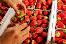 Using strawberries as their test case, botanists at the University of Basel have developed an efficient, low-cost approach to confirming claims of geographical origin.