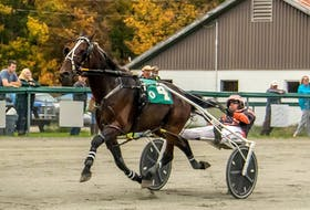 Intended Royalty and Redmond Doucet are shown all alone at the wire in winning his leg of the Governors Cup Series. Harness racing action resumes Saturday at Northside Downs in North Sydney at 1 p.m. CONTRIBUTED • TANYA ROMEO