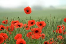 A field of poppies. This is the 100th anniversary of the iconic symbol. Contributed • Royal Canadian Legion