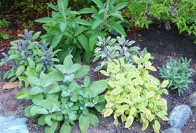 Herbs are available in many varieties and plant sizes.