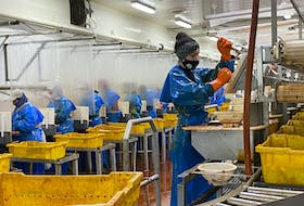 A worker on the processing line at Ocean Pride Fisheries separates the skin from the meat of a sea cucumber. CARLA ALLEN • TRI-COUNTY VANGUARD