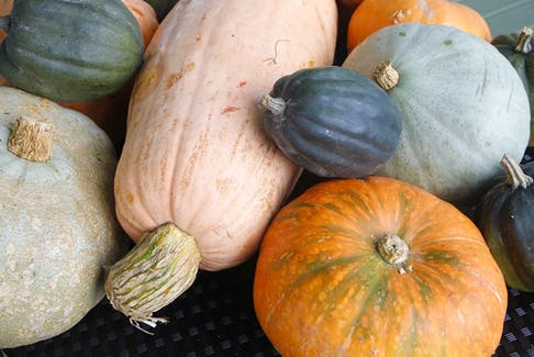 Pumpkins and winter squash can be harvested when the leaves have mostly died back on the vines and the stem is dry and shrivelled.