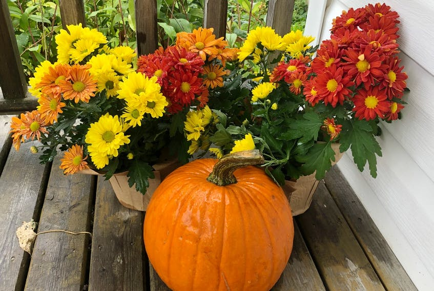 Thanksgiving is a holiday enjoyed by most Canadians, not only because it is a time to get together with family and friends, but because of the beautiful time of year. And the meaning of gratefulness is very important to all Canadians. CONTRIBUTED