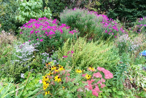 Perennial New England asters in back, various wild asters and lemon balm in mid-field, and yellow coneflower and sedum in the foreground. Contributed