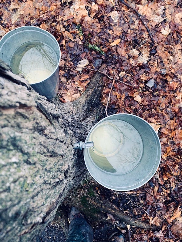 These buckets hang in our sugar bush on the farm in Bainsville, Ont. My brother Ronnie has already transformed the sap into delicious maple syrup. No word yet on if mom has made a syrup pie for Easter.