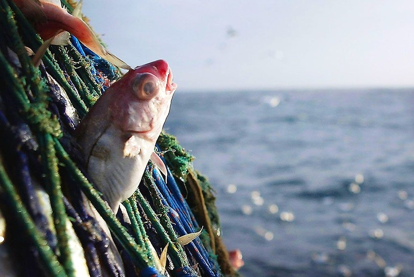 The new Netflix documentary Seaspiracy has people swearing off eating fish. But is it really that simple?