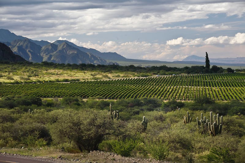 Vineyards in Argentina's northern provinces, such as this one in Salta, are the highest in the world, sitting in the foothills of the Andes, at elevations as high at 10,000 feet above sea level. - WOFA, Wines of Argentina