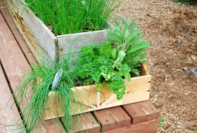 Herbs make great starter plants for small spaces like decks or balconies.