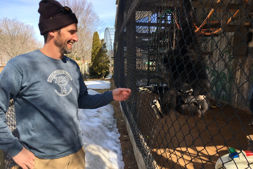In this file photo, Oaklawn Farm Zoo zookeeper Mike Brobbel hands 33-year-old gibbon Boo Boo, pictured carrying a new baby, a cracker. FILE PHOTO
