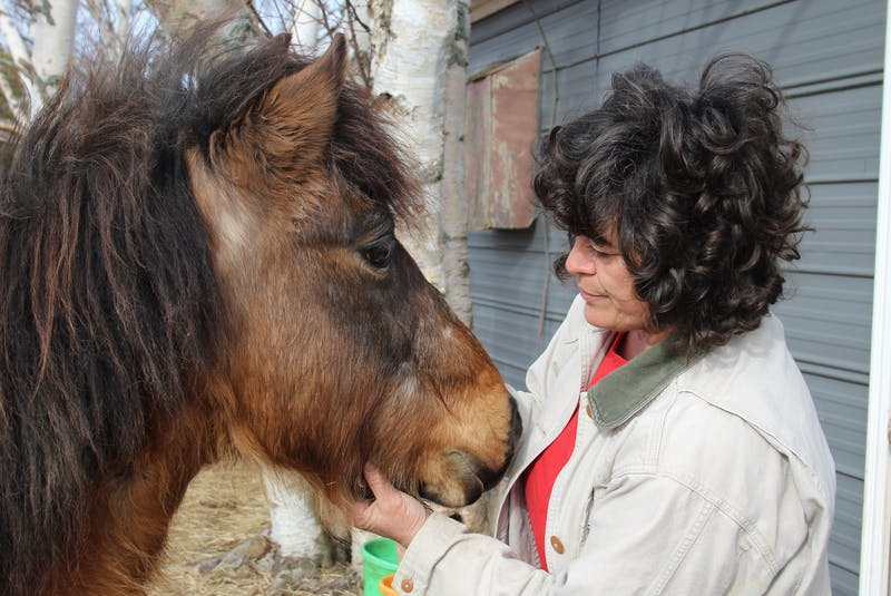 Dawna Gillis suspects her new horse, Missy Jean, is a rare Newfoundland pony and is sending away samples of her DNA to help make a determination. If confirmed as such, the animal will be registered with the Newfoundland Pony Society.  - Colin Maclean