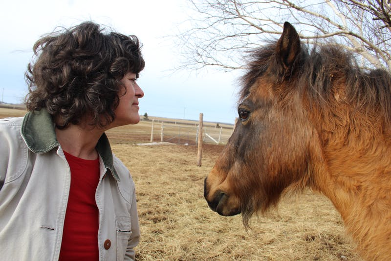 Dawna Gillis with her new horse, Missy Jean. Gillis suspects Missy Jean is a rare Newfoundland pony and is sending away samples of her DNA to help make a determination. If she is confirmed as such, she will be registered with the Newfoundland Pony Society.  - Colin Maclean