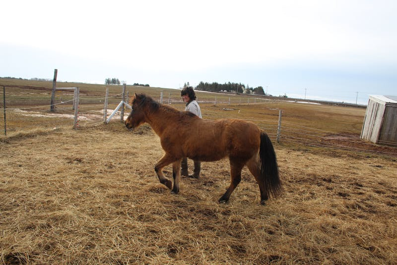 Dawna Gillis and Missy Jean out for a walk at Dadoole's Stables in Norboro.   - Colin Maclean