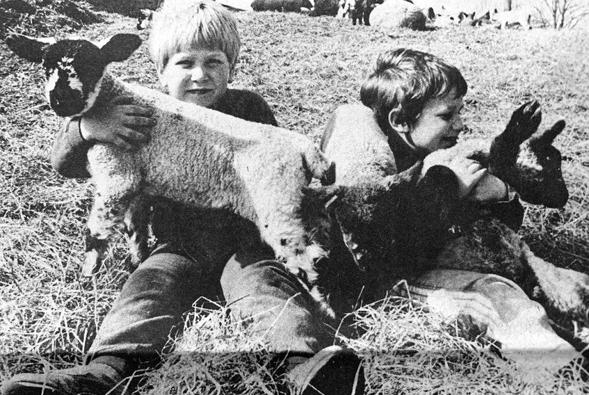 Enjoying the warm spring weather in 1986 were Keith Richards and Randy Anthony, who visited Orland Berggen's farm in Belmont. The farm had already welcomed 65 lambs to its flock that spring.