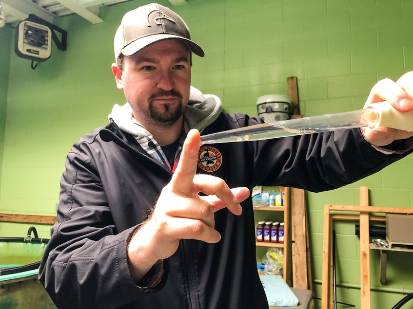 Jeff McNeil, president of the Port Morien Wildlife Association, holds up a trout egg at the non-profit association's incubation centre, on Feb. 1, 2021. JESSICA SMITH/CAPE BRETON POST