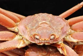 Fishers in N.L. are currently being paid $5.73 a pound for snow crab.