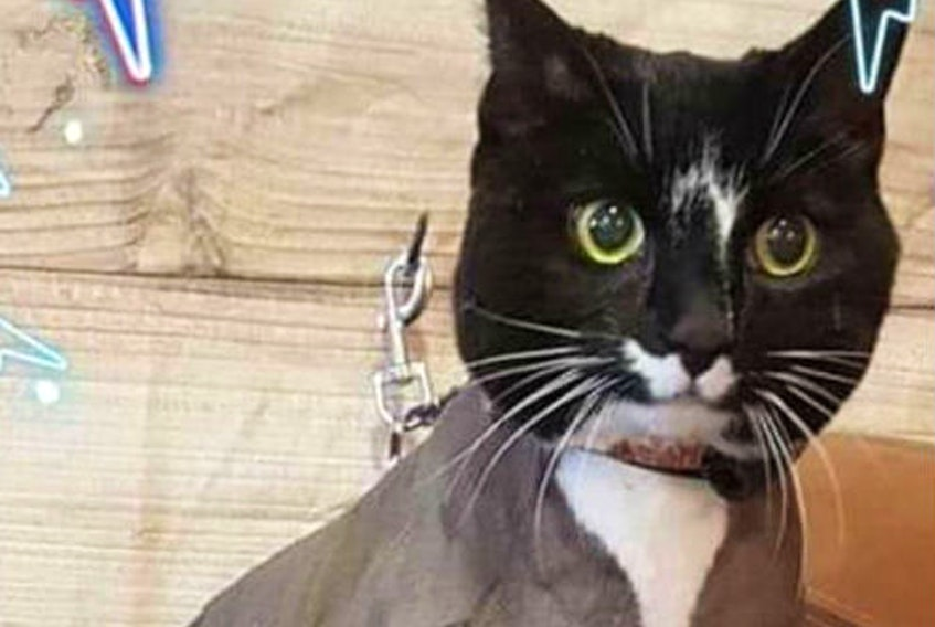 Mittens the cat was killed by Peter Rossiter and Jody Anderson in Port aux Basques in September 2019.