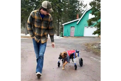 Jacob Murphy takes Ritz, in his new wheelchair, for a walk around the yard. The Texas-born shepherd mix has found his forever home in Cardigan, P.E.I.