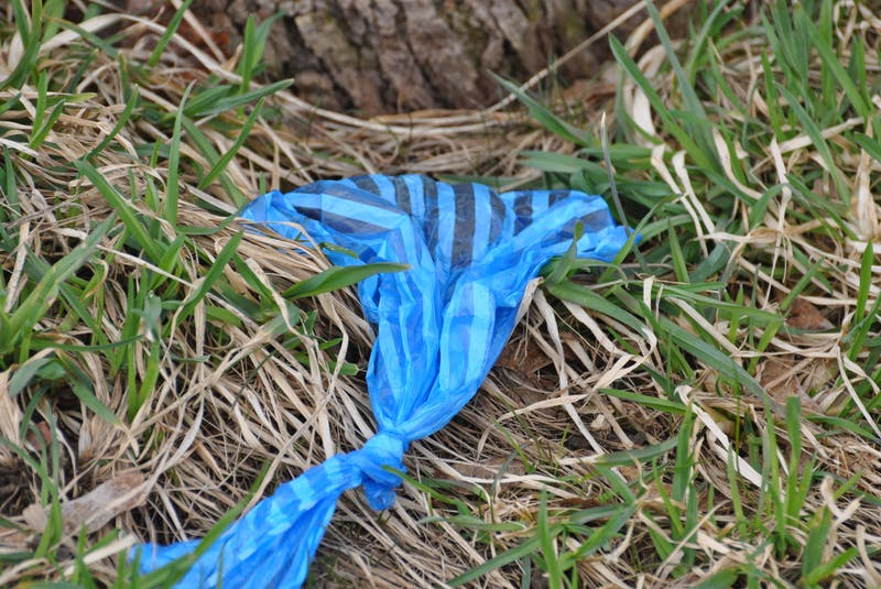 Plastic bags filled with dog feces, like this one found Wednesday, have been scattering the Blomidon Golf and Country Club property this year, to the frustration of management and maintenance workers. - Diane Crocker