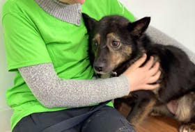 Bhreagh MacLeod, a volunteer with the Cape Breton SPCA comforts Lily, one of 77 dogs surrendered to the Nova Scotia SPCA on April 12. NOVA SCOTIA SPCA