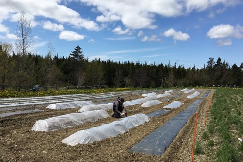 Low tunnels such as these and degradable bioplastic mulches are being tested in Happy Valley-Goose Bay and other northern locations. — Contributed