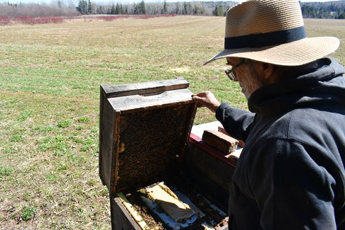 Stan Sandler lifts the top of a beehive, showing off the busy activity inside in April 2020. Michael Robar • The Guardian