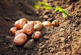 A new podcast surrounding potato farming has launched from the P.E.I. potato board.