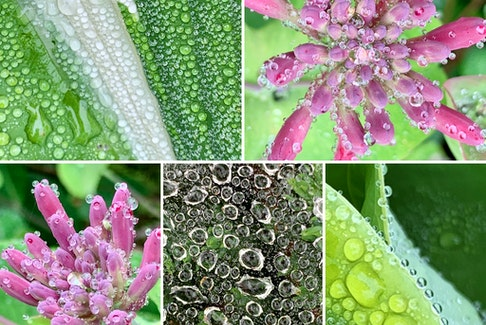 Have you ever seen the morning dew like this? Linda Wozniak was behind the lens in Greenwood, N.S., when she captured these stunning photos of dewdrops on some plants and a spider web.