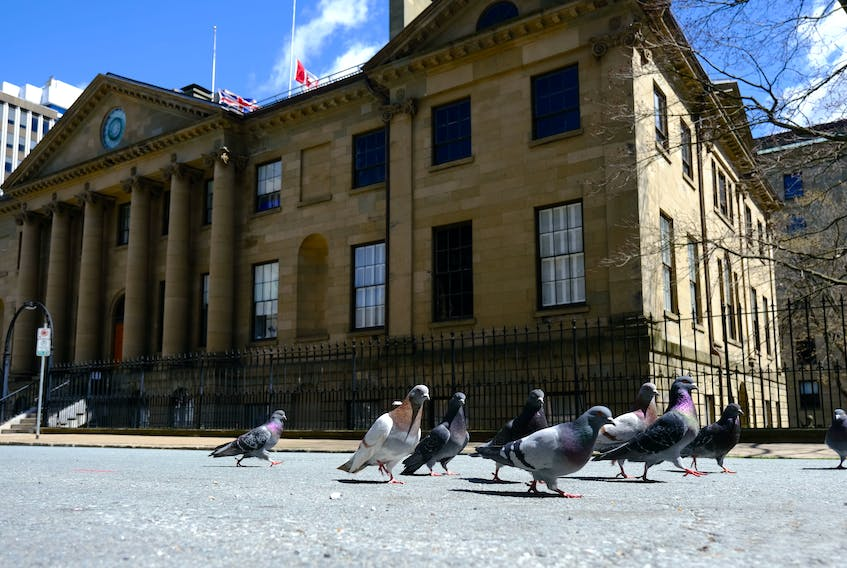 FOR LOCKDOWN STORIES: Pigeons are seen on empty Granville Street, backdropped by Province House on the first day of a provincial covid-19 lockdown, in Halifax Wednesday April 28, 2021.  TIM KROCHAK PHOTO