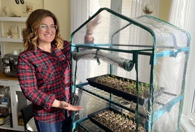 Mini-greenhouses are great for sowing seeds whether you have limited space, funds, or looking to extend your growing season. – Paul Pickett photo