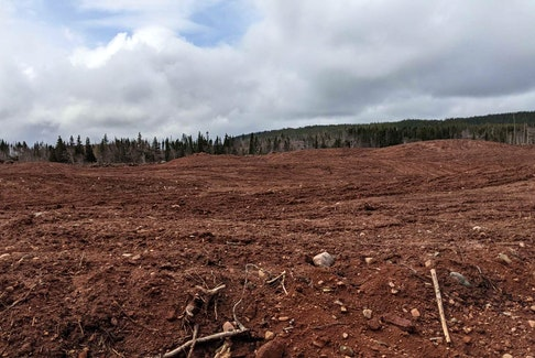 This land at Dead Water Brook in Cormack is one of three parcels the province made available to lease for potato farming.