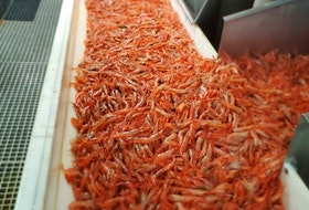 The shrimp fishery in the Gulf will start in May.