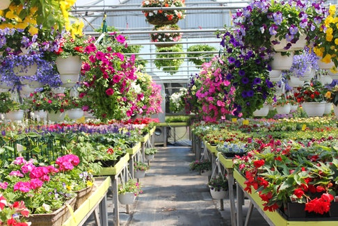 You'll find a huge selection of plants, seeds, and supplies at local nurseries this spring. - Niki Jabbour